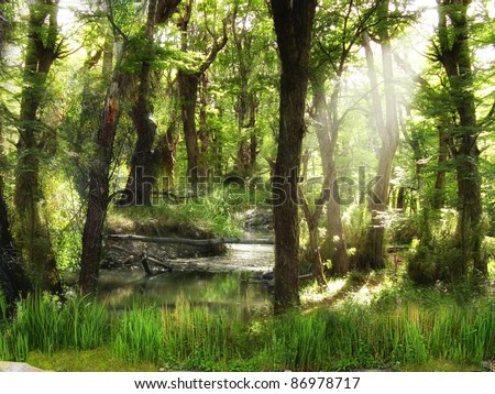 A beautiful woods with stream and afternoon sun filtering through the leaves.