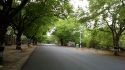 A beautiful work road with old trees both the side - A pic from one of the holy places Arunachalam in South India