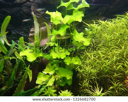 A beautiful world of aquatic, aquatic plants #1326682700