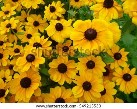 a beautiful yello flower decorative background #549215530