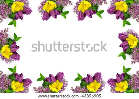 A beautiful yellow and purple tulip spring border, with white copy space in the center, horizontal, great for Easter
