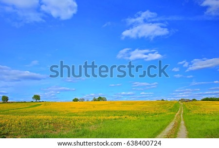 A beautiful yellow mustard field and blue sky in Ohio farmland in springtime.