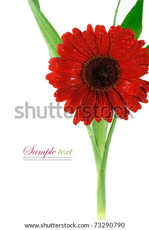 a beauty red flower isolated.
