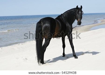 A beautyful stallion standing freely on the beach