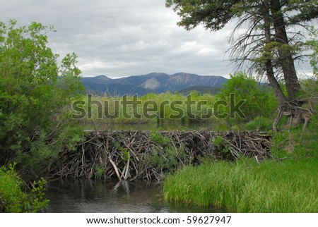 A beaver dam holds back the rain and runoff from the mountains.