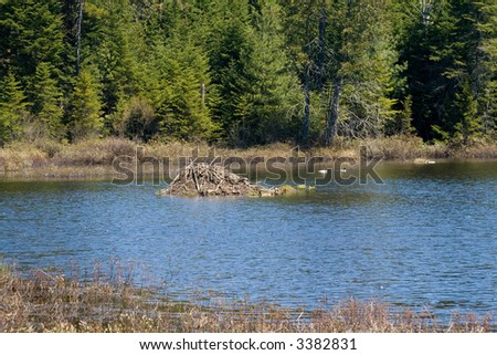 A beaver lodge in the Mastigouche Natural Reserve