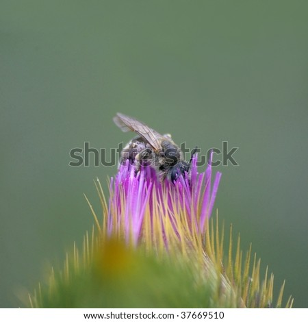 a bee alighted in a purple flower