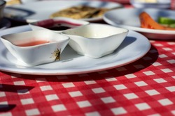 a bee eating jam of the breakfast table.