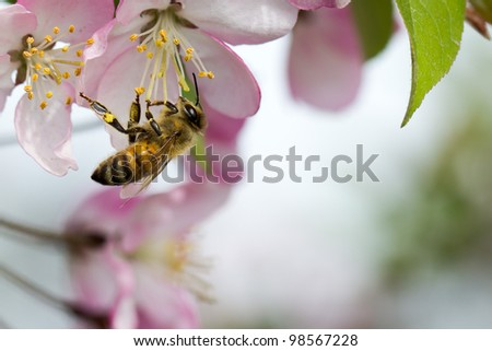A bee is gathering honey