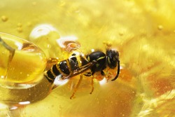 a bee is swimming after eating someone else's honey