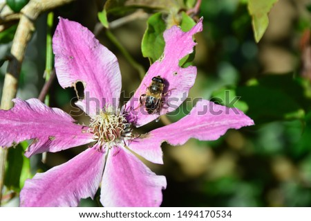a bee on a beautiful pink flower #1494170534