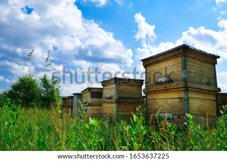 Photo of  A beehive from a tree stands on an apiary. The houses of the bees are placed on the green grass in the mountains. Private enterprise for beekeeping. Honey healthy food products.