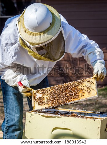A beekeeper inspects a frame she\'s pulled out of the hive