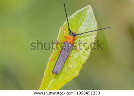 A beetle crawls up on the grass outside #1058451230