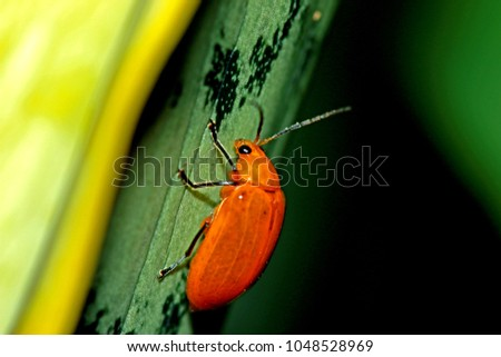 A beetle in nature #1048528969