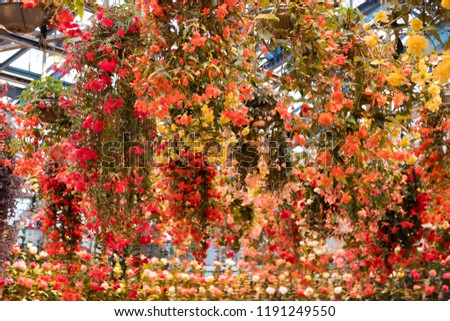 A begonia garden with suspended flowers #1191249550