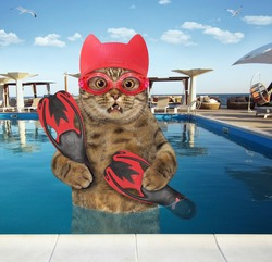 A beige cat in a red swimming hat and goggles holds flippers in the pool at a beach resort.