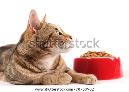 A bengal cat looks up into the copy space above a bowl of dry cat food. #78759982