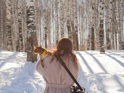 A Bengal cat with a surprised face is traveling on the shoulder of an unknown girl. Walk with your pet through a spring birch grove in the rays of the dawn sun. The concept of an active lifestyle.