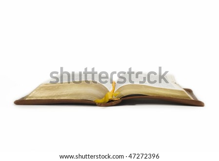 a bible open on its spine against a white background isolated