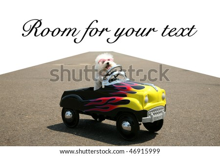 a bichon frise dog drives her hot rod pedal car around town on the road with a vanishing point on white, with room for your text or images