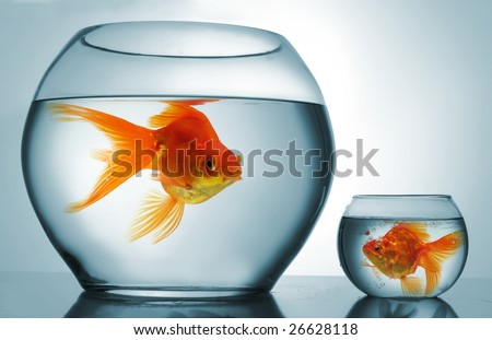 A big bowl and a small one with goldfish