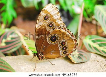stock-photo-a-big-butterfly-sitting-on-the-rack-closeup-shoot-49168279.jpg