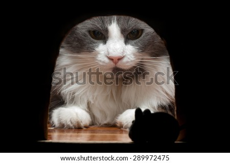 Stock Photo A big cat waits for the mouse to come out from his hole in the wall where he is hidden.
