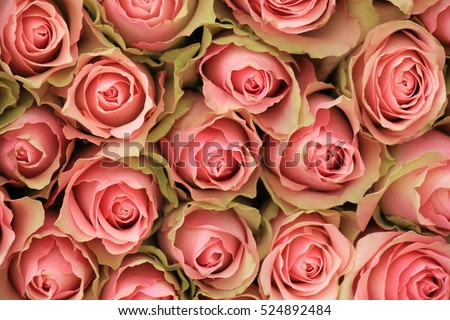 A big group of pink roses in a wedding decoration piece #524892484