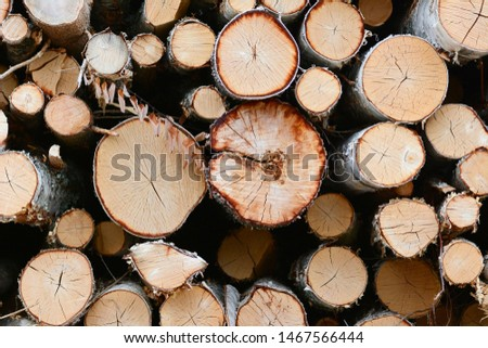 A big pile of trees. Pile of logs.