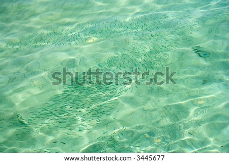 A big school of tiny sea fish (shot from outside the water) - stock photo