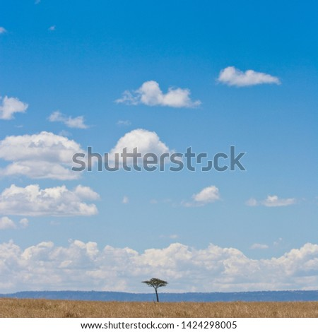 A big sky picture from the Masai Mara, Kenya, Africa