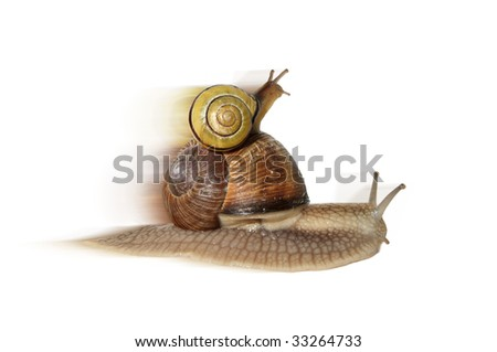 a big snail carrying a small one on her back