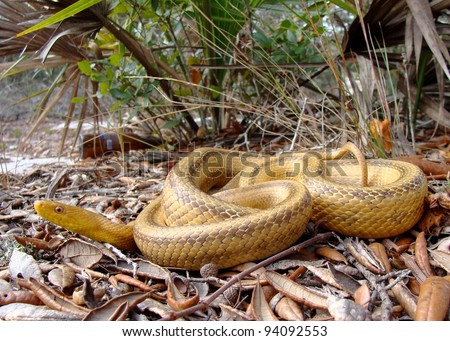A big snake in almost pristine habitat - litter and the environment