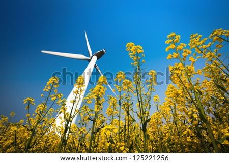 a big wind turbine in rapeseed field with a clear sky
