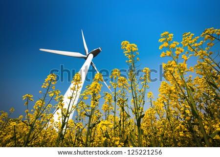 a big wind turbine in rapeseed field with a clear sky