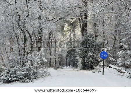 A bike path in a snowy forest