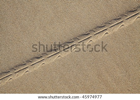 A bike tyre track in the smooth sand.