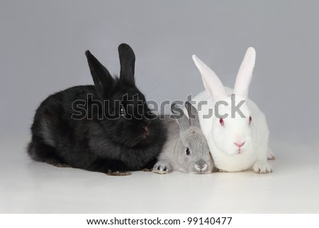 A biracial bunny rabbit is loved by his parents