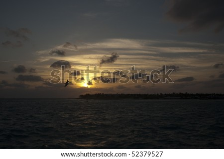 A bird at sunset on a cloudy sky above Gulf of Mexico