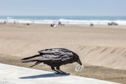 A bird at the beach holding a piece of plastic in his beak