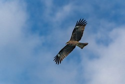 A bird circling while aiming for its prey
