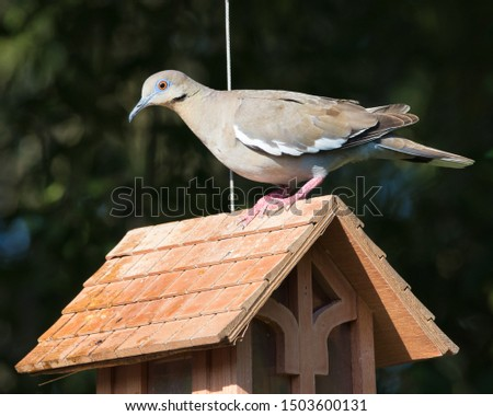 a bird feeder built like a house with a mourning dove perched on the roof