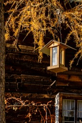 a bird feeder hangs on an autumn-colored larch. the orange and yellow larch needles glow in the evening light. the dark brown wooden facade stay in hard contrast to the illuminated feeding station