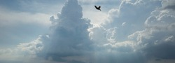 A bird flies in the sky. Beautiful blue sky in thick clouds