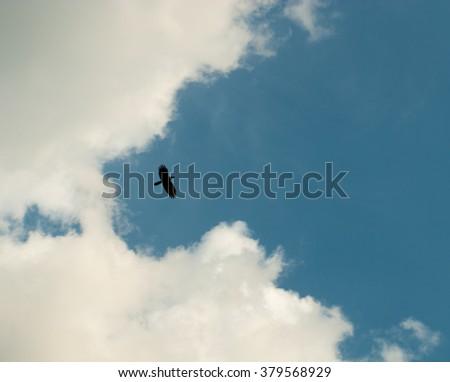 A bird fly high represent freedom #379568929