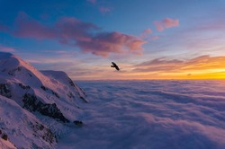 A bird flying over the clouds and snowy mountains at sunset