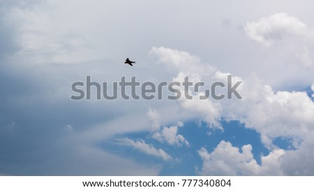 a bird flying overhead in the clouds and blue sky #777340804