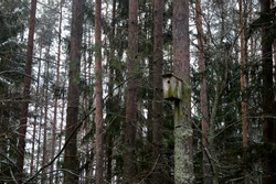 A bird house on the edge of a forest. Winter forest landscape.
