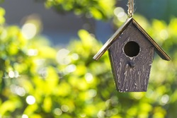 A bird house or bird box in summer or spring sunshine with natural green leaves background